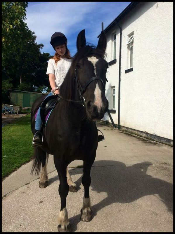 16.2hh Mare For Sale Animals