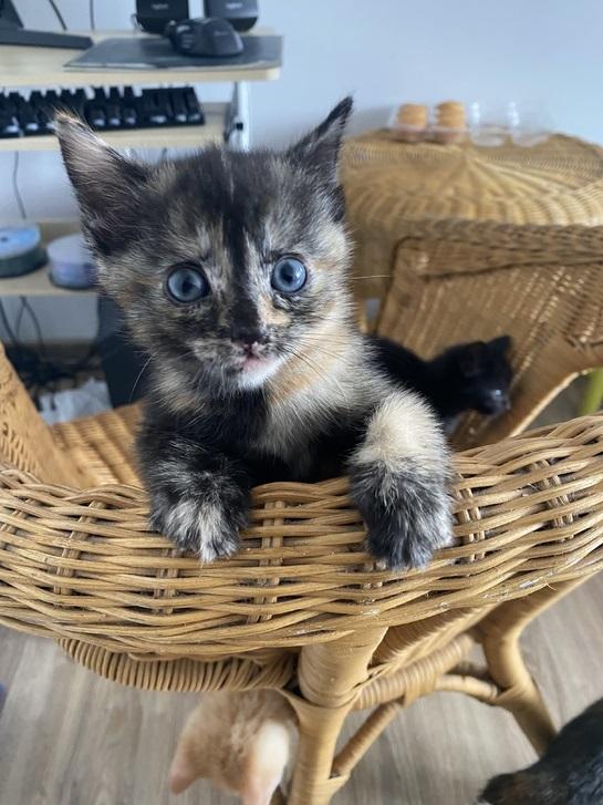 4 beautiful kittens Animals