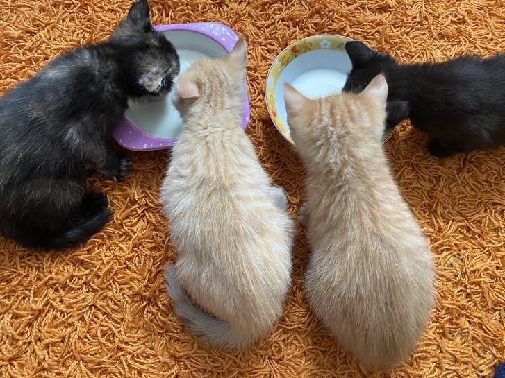 4 beautiful kittens Animals 2