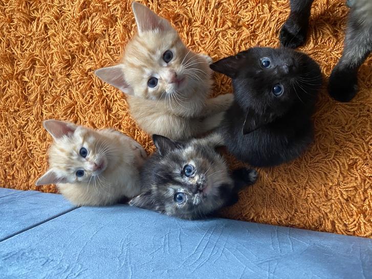 4 beautiful kittens Animals 3