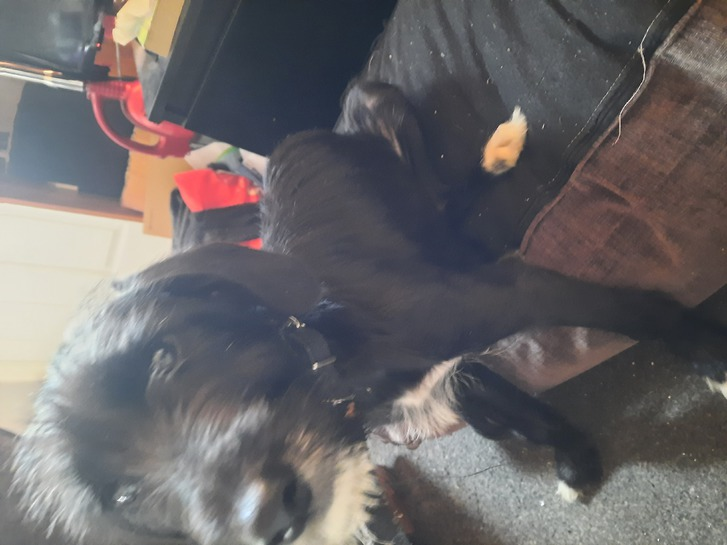 5 months old puppy  Animals
