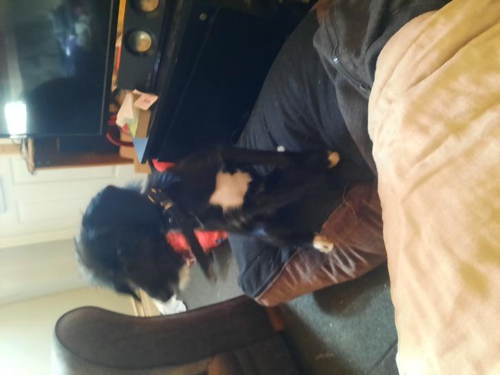 5 months old puppy  Animals 4