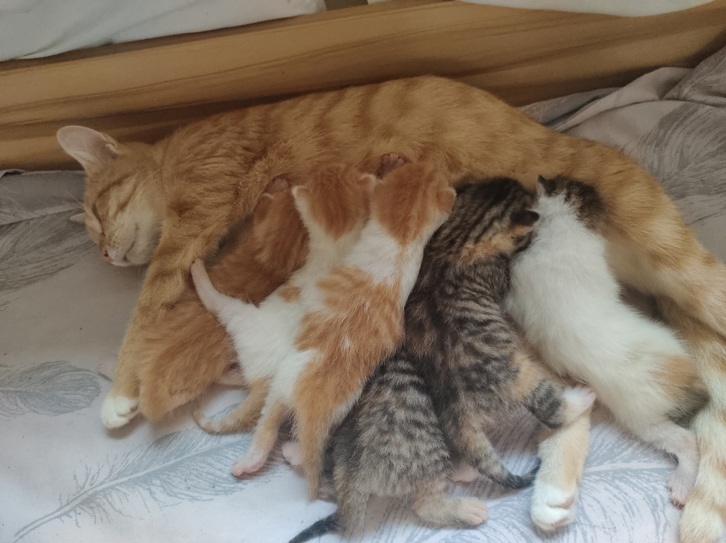 6 beautiful cute kittens Animals 2