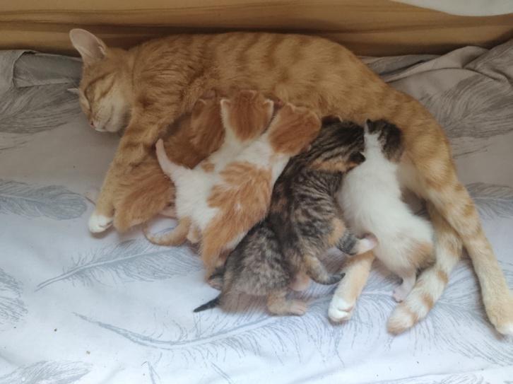 6 beautiful cute kittens Animals 4