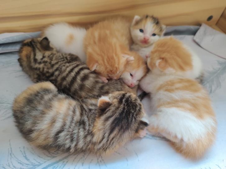 6 beautiful cute kittens Animals 3