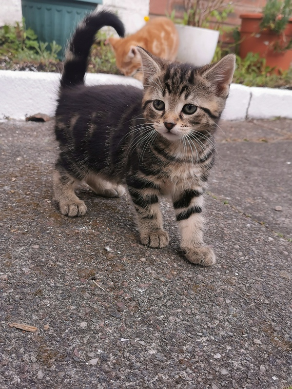 Adorable kittens looking for a new family Animals