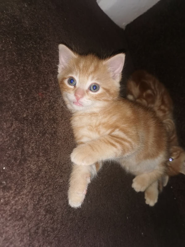 Adorable kittens looking for a new family Animals 2