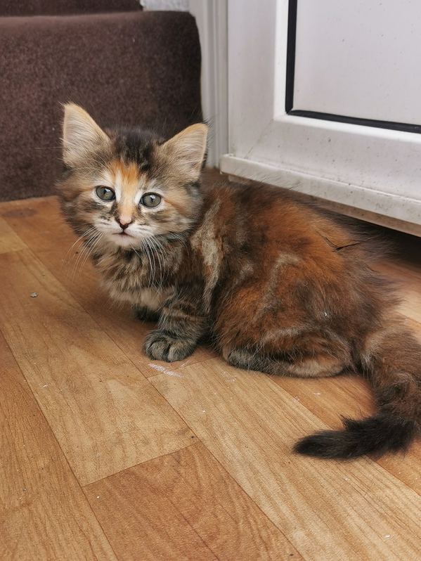 Adorable kittens looking for a new family Animals 3