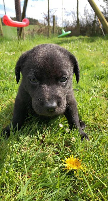 Aussidor puppies  Animals 2