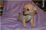 Beautiful Kennel Club registered pups are available now