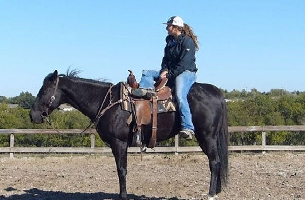 Black quarter gelding, Jack Animals