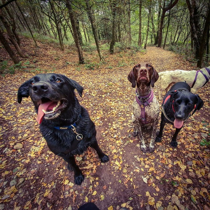 Dog Adventures  Animals 2