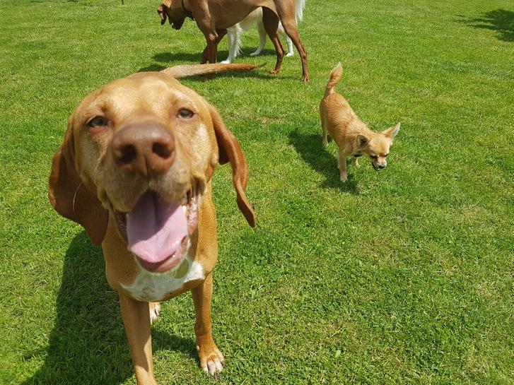 Dog Adventures  Animals 3