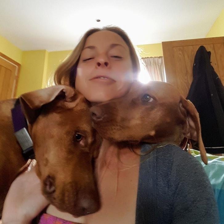 Dog Adventures  Animals 4