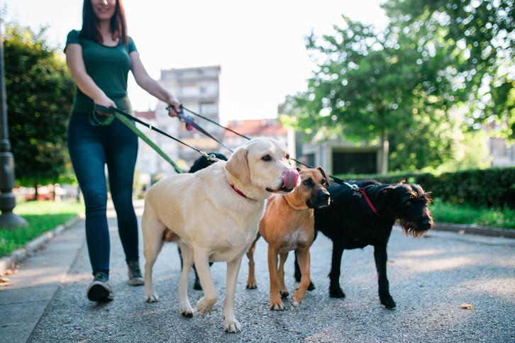 Dog Grooming LTD  Animals 3