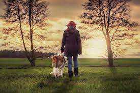 Dog walking firms are much sought after these days as they try to bring solutions to one of the foremost worries of the pet owners – the walking needs of the dogs. Animals