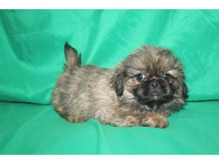 Excellent Pekingese Puppies Animals