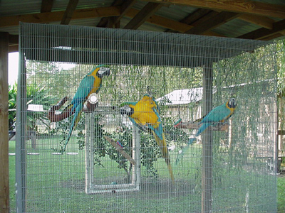 FERTILE PARROT EGGS AND BABIES FOR SALE Animals