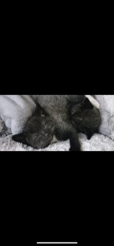 Kittens  Animals