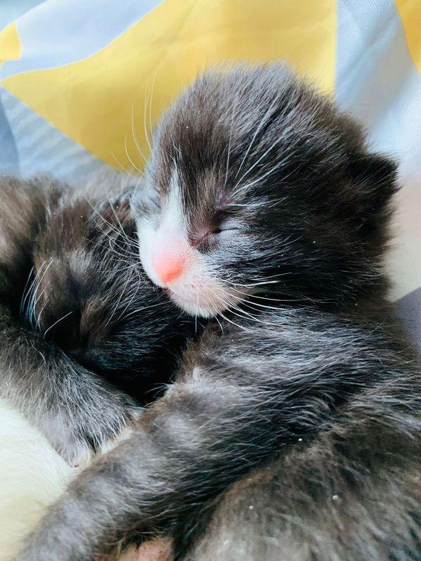 Kittens  forsale Animals