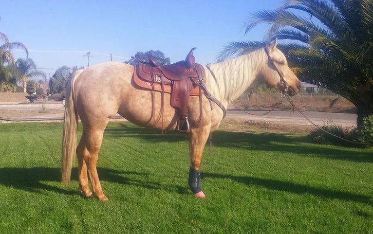 Trail Mare Price Reduced Motivated  Animals