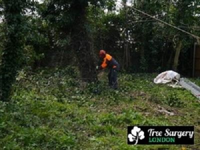 Tree Surgery London - Gardeners Garten & Crafts 3