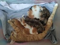 6 beautiful cute kittens