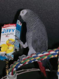 Adorable and home coming parrots available